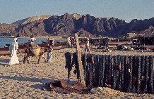 Filets de pêche et extraction de sable sur la plage d'al-Bustân, en Oman, où est bâti aujourd'hui l'hôtel al-Bustân, d'un luxe extrême, 1977.