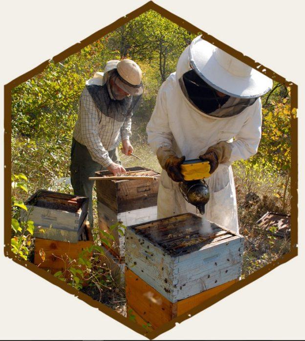 Les trésors de la médiathèque : Les abeilles…